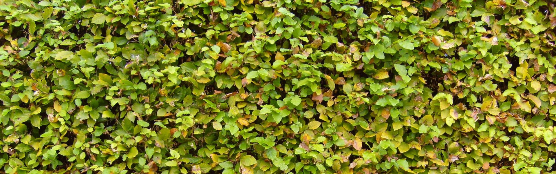 Vivai Green Garden